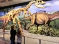 Dino-Natl-Mon-6317-800x600.jpg