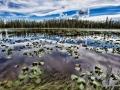 Lily Pond Madness.jpg