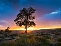 Ponderosa Sunset at Red Canyon.jpg