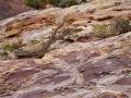Sandstone Patterns at Split Mtn. 2 .jpg