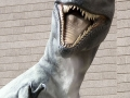 Dino-Natl-Mon-0445-800x600.jpg