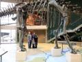 Dino-Natl-Mon-6356-800x600.jpg