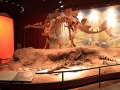 Dino-Natl-Mon-6372-800x600.jpg