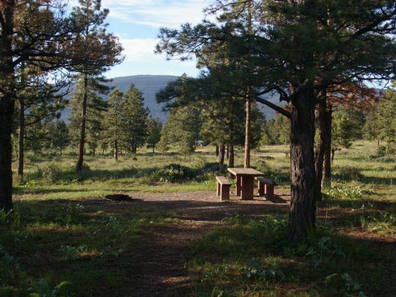 Beautiful campground with pine trees and a picnic table