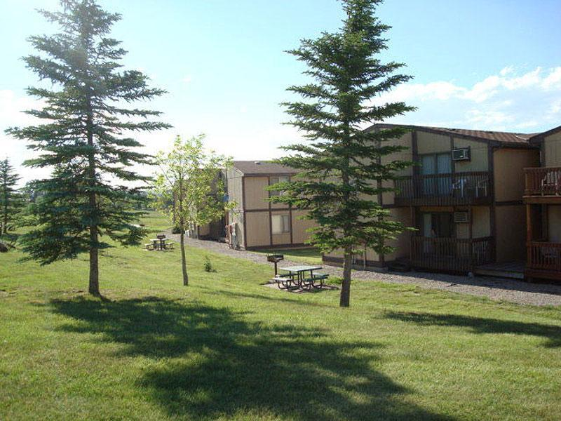 Flaming gorge resort surrounded by pine trees and a few picnic tables.