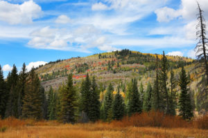Ashley National Forest in Autumn