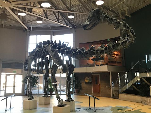 diplodocus fossils on display at Utah Field House Museum