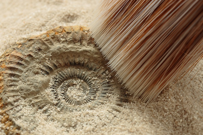 a brush moving away sand from a fossil